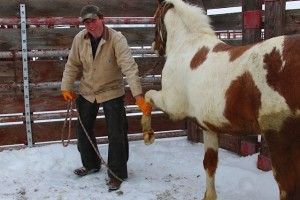 WA Horse Slaughter Durango15-300x200