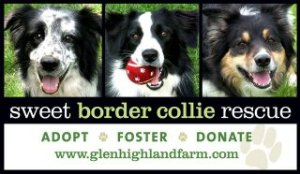 glenhighlandfarm borde collie rescue NY