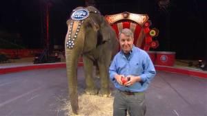 Carol the Elephant