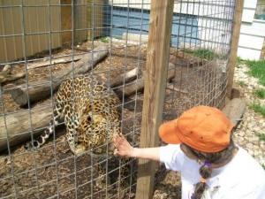 big cat contact