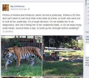 tiger rescue BCR
