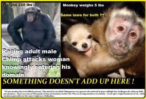 Poster chimp vs tiny monkey