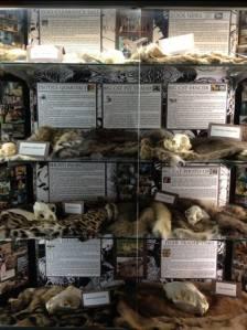 BCR-Skins and skulls2