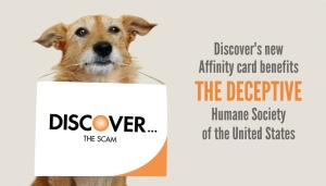 Discover the Scam