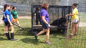 BIG CAT RESCUE in Violation