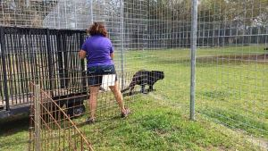 BIG CAT RESCUE Violation2