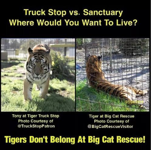 Tiger Truck Stop v BCR