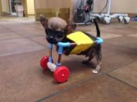 Crippled dog 3