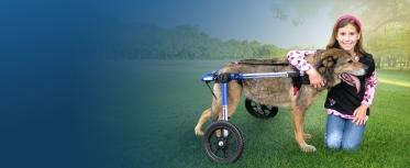 Crippled dog2