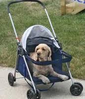 crippled dog5