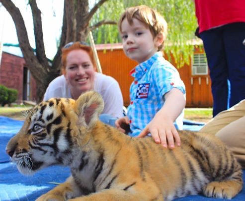 a-lie-baby-tiger-and-boy-petting
