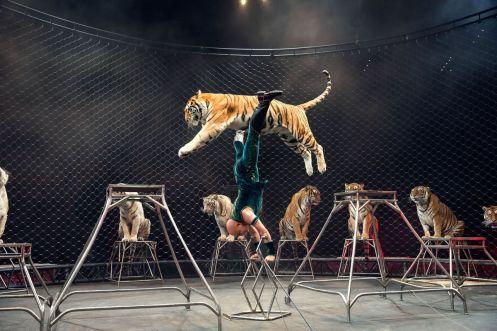 circus-cat-act